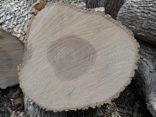 Безкоштовне стокове фото на тему «© corde, arbre, bois, feuille»