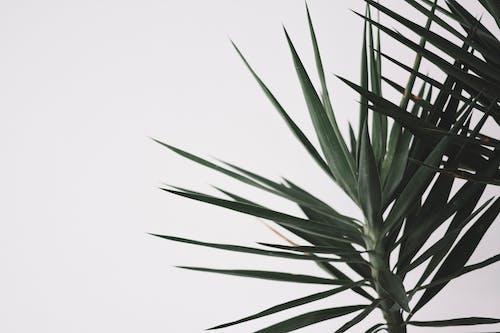 Green Plant Under White Sky