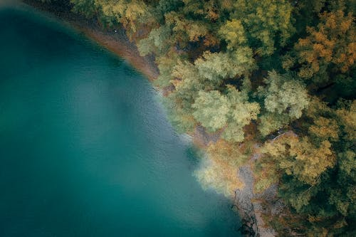 Picturesque aerial view of turquoise sea with rippled water near soundless forest with multicolored trees in fall in daylight