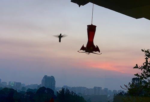 Free stock photo of beautiful, beautiful sky, beautiful sunset