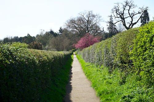 Photos gratuites de arbres, chemin, espace extérieur