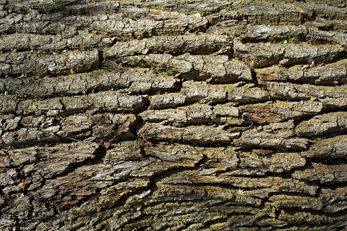 Close Up View Of Bark Of A Tree