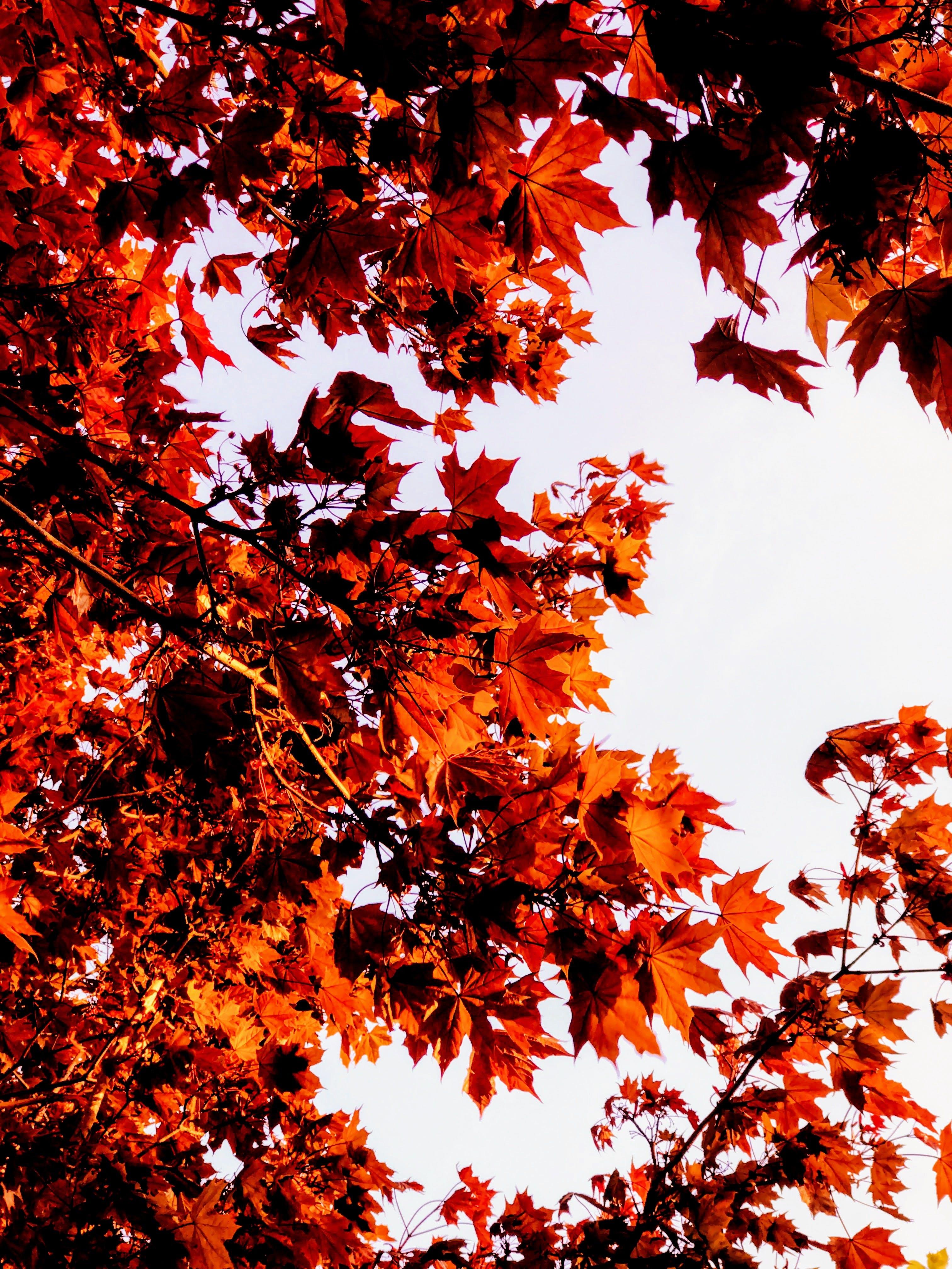 Foto stok gratis alam, bersemangat, bidikan sudut sempit, cabang