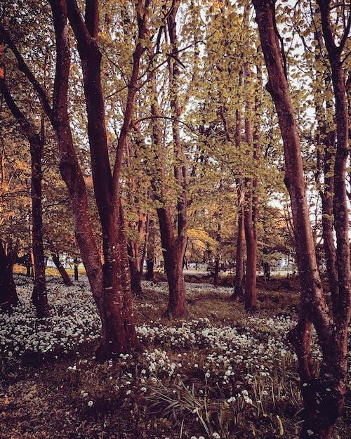 Ilmainen kuvapankkikuva tunnisteilla ilta, irlanti, metsä