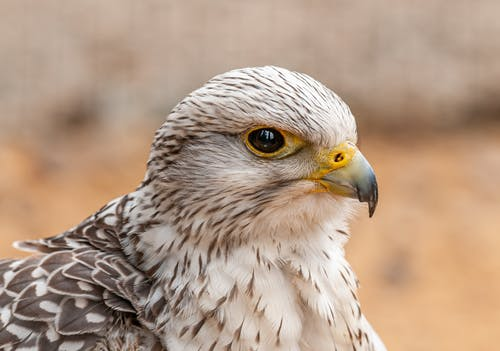 Hawk with black eye and pointed beak in zoological garden