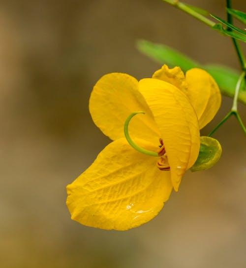 Immagine gratuita di ambiente, aroma, aromatico