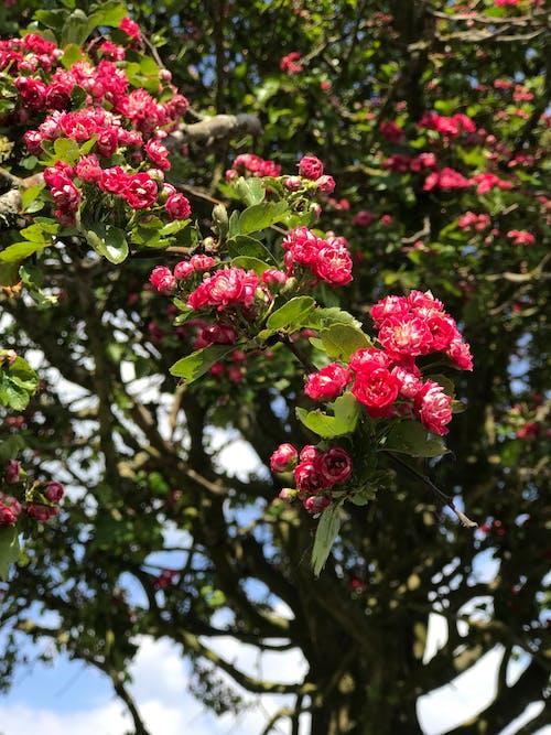 Ilmainen kuvapankkikuva tunnisteilla kauniit kukat, luonto, punainen, puut