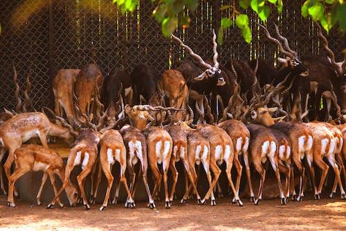 Herd of deer eating from manger in zoo