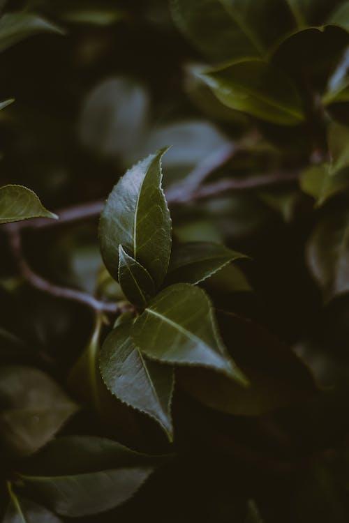 Green leaves growing on tree twig