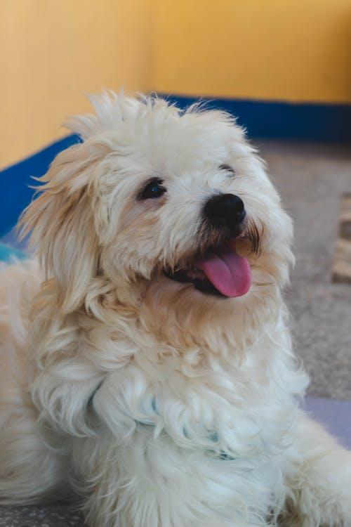 Fotos de stock gratuitas de adorable, animal, animal domestico, bebé
