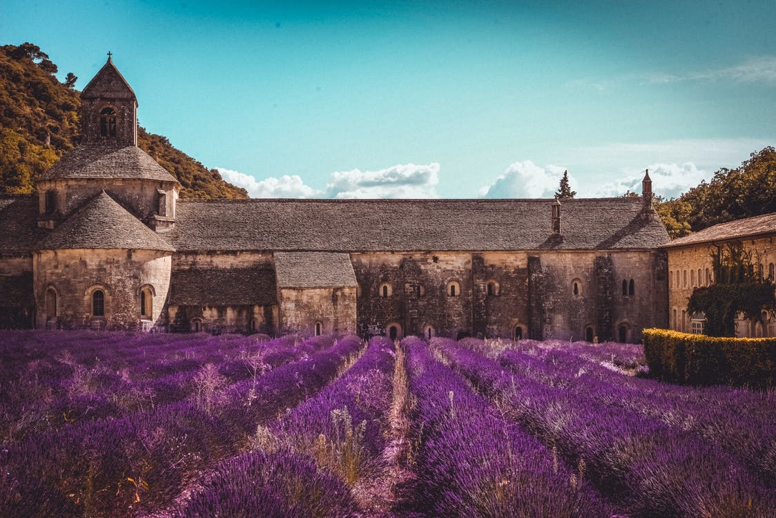 Amazing view of aged Catholic abbey in Provence near lush fragrant lavender field on clear summer day