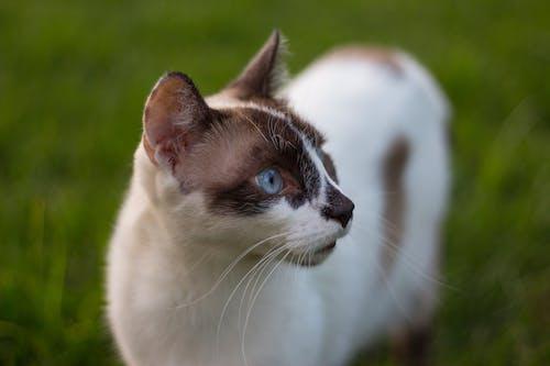 Foto profissional grátis de animais de estimação, animal, ecológico, gato