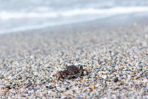 Foto profissional grátis de areia, areia da praia, beira mar, caranguejo