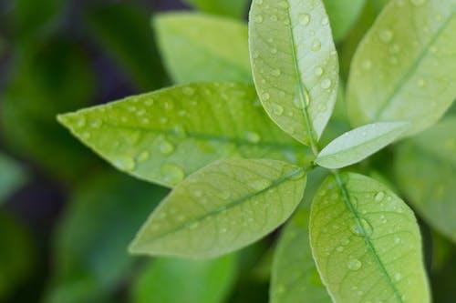 Foto profissional grátis de ecológico, folhas de primavera, gotas d'água, limoeiro