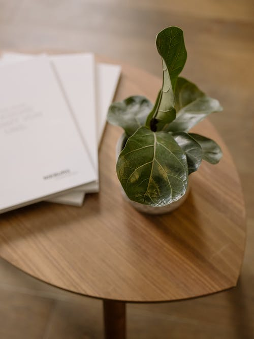 Green Leaf Plant on Brown Wooden Table