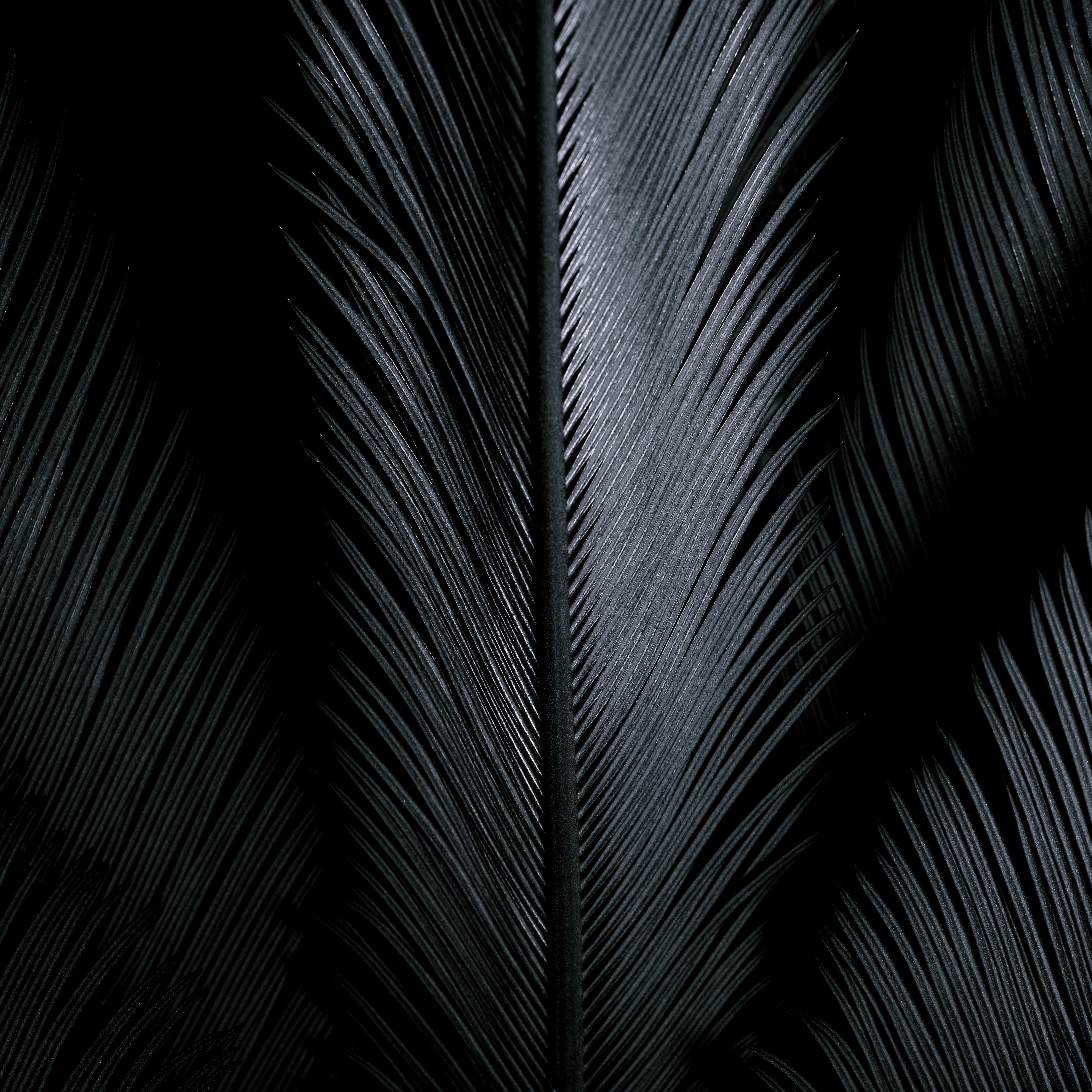 Gray Shiny Feathers On Black Background Free Stock Photo