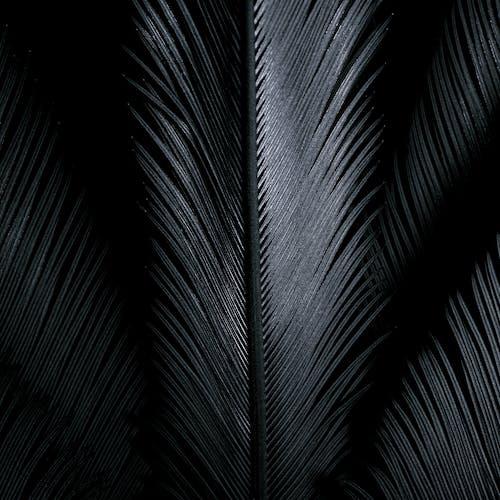 Серые блестящие перья на черном фоне