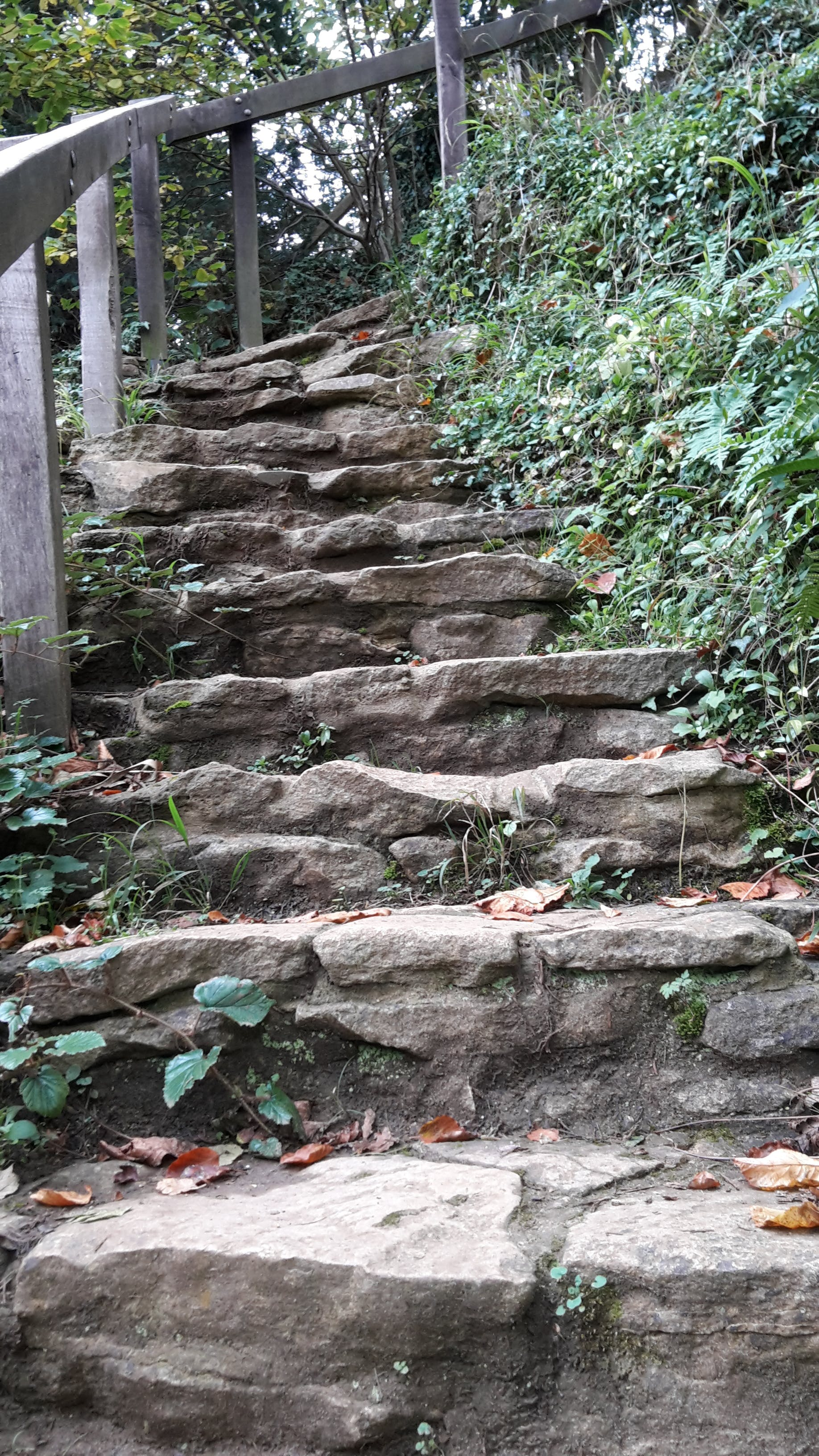 Free stock photo of pathway, steps