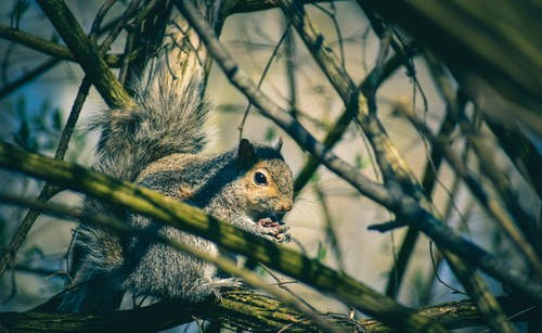 Adorable gray squirrel sitting on tree branch in forest