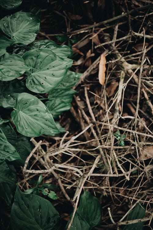 Безкоштовне стокове фото на тему «beleza da natureza, folhas, verde»