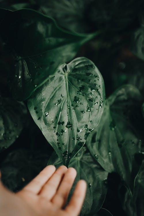 Immagine gratuita di acqua, arte, autunno