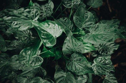 Безкоштовне стокове фото на тему «абстрактний, близький, ботанічний»