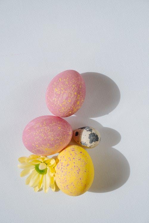 Imagine de stoc gratuită din culori pastelate, floare, fundal alb