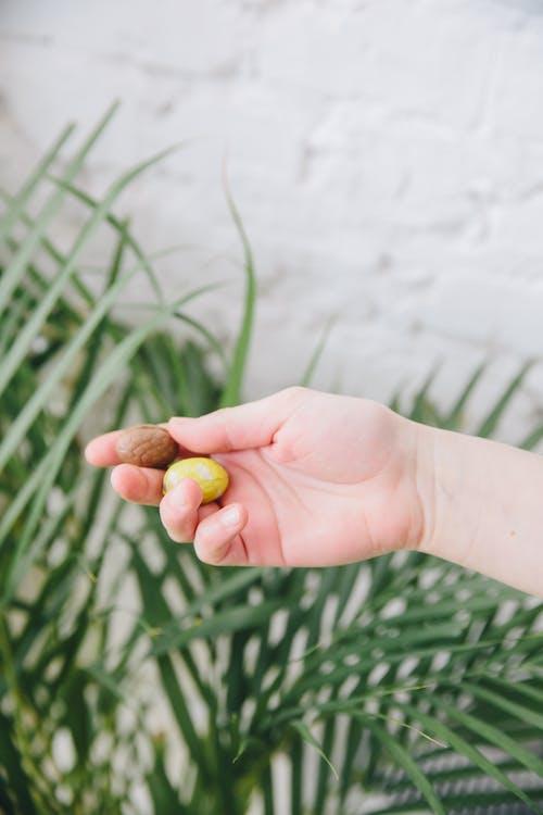 Hand Holding Chocolate Eggs