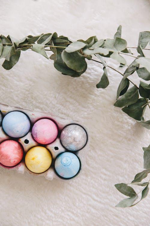 Fotos de stock gratuitas de bandeja de huevos, carton de huevos, colores pastel, colorido