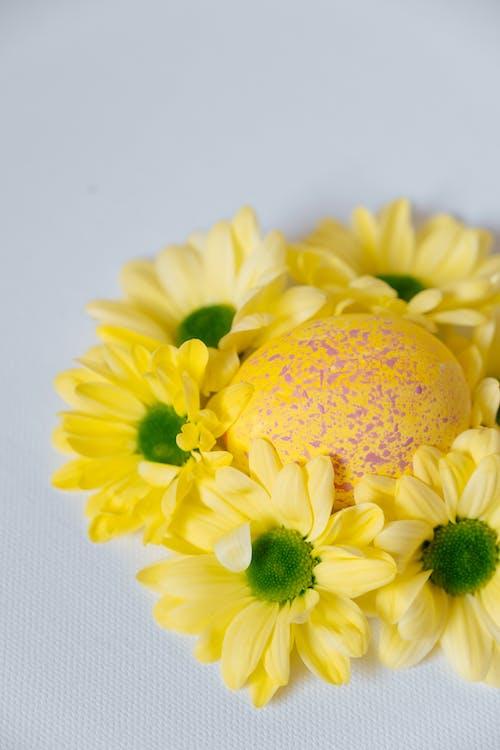 Immagine gratuita di Buona Pasqua, fiori gialli, giallo, natura morta