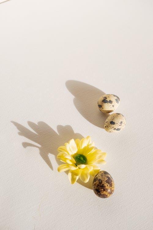 Quail Eggs and a Yellow Flower
