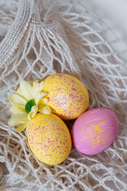 健康, 傳統, 巢, 復活節 的 免費圖庫相片