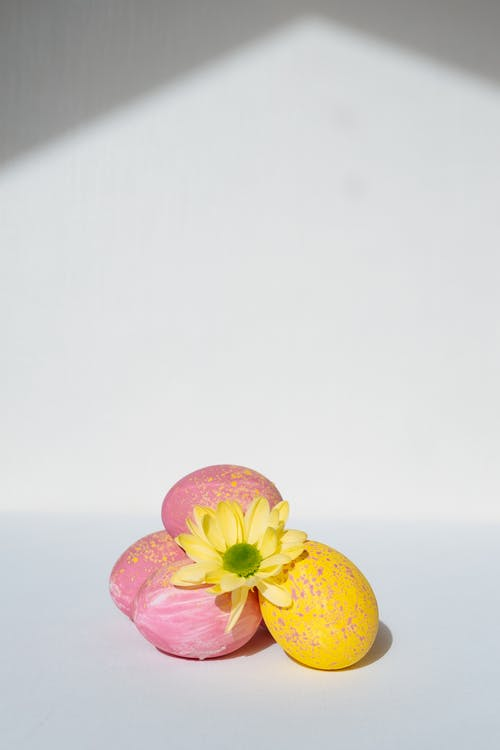 Yellow and Pink Flower on White Surface