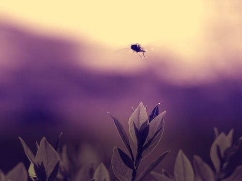 Selective Focus Photography of Fly
