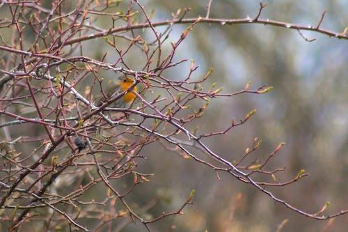 관목, 덤불, 새, 새 둥지의 무료 스톡 사진