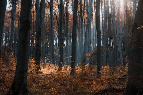 Brown Trees on Brown Field