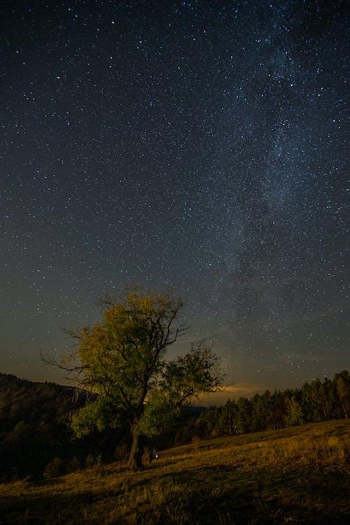 คลังภาพถ่ายฟรี ของ กลางคืน, กลางแจ้ง, กลุ่มดาว, กลุ่มดาวนายพราน