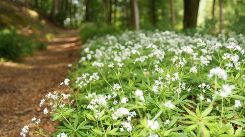 Free stock photo of flowers, forest, forestry