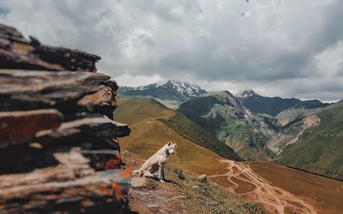 Δωρεάν στοκ φωτογραφιών με βουνά, Εξωτερικός χώρος, οροσειρά, παλιό σκυλί