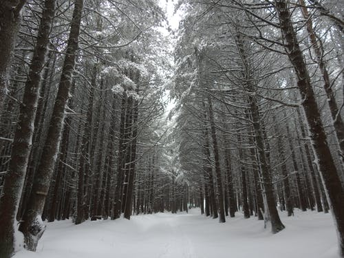 Scenic Photo Of Trees During Winter