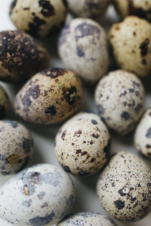 Close-Up Photo Of Quail Eggs