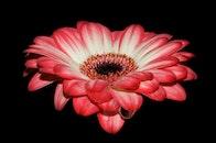 petals, wet, flower