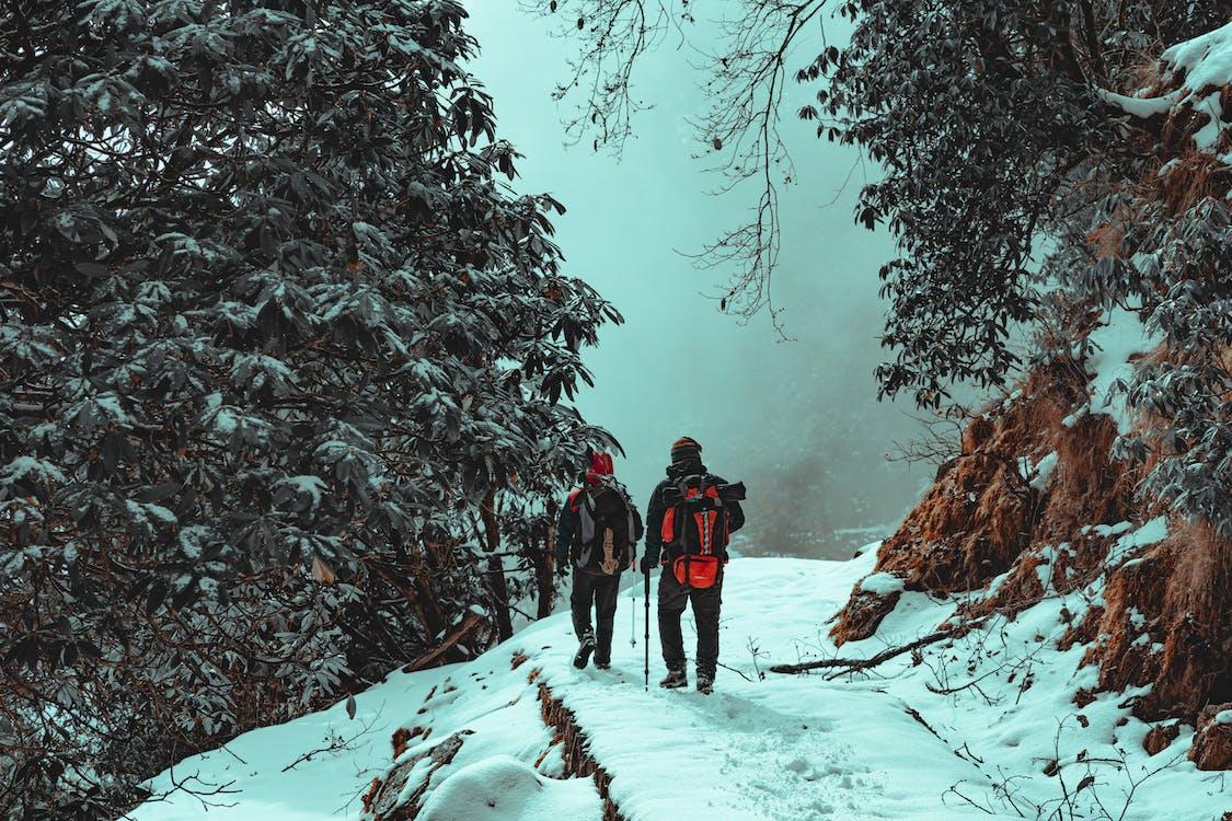 Immagine gratuita di alberi, alpinismo, arrampicarsi