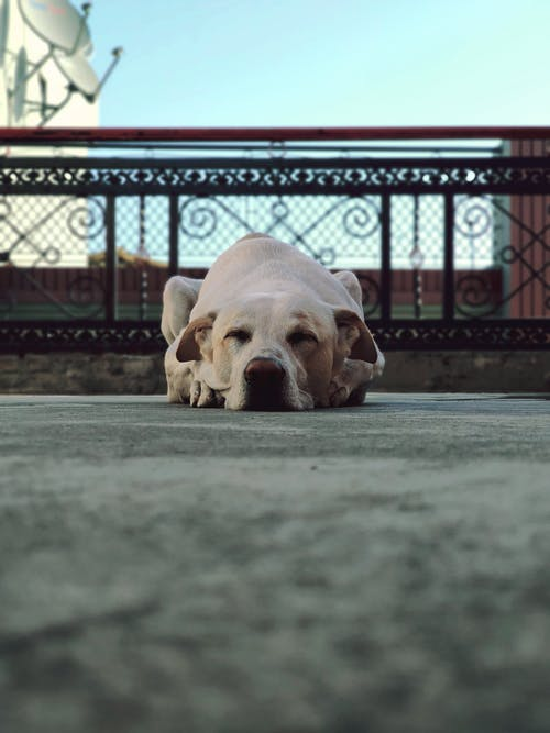 Photo Of Dog Laying On The Ground