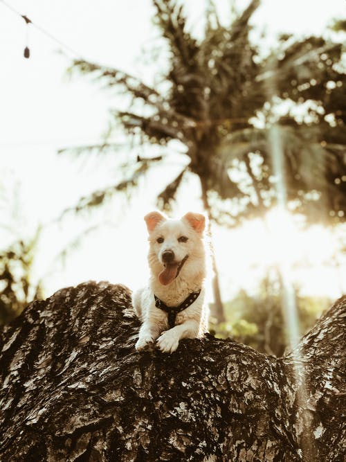 Photo Of Dog Leaning On Tree