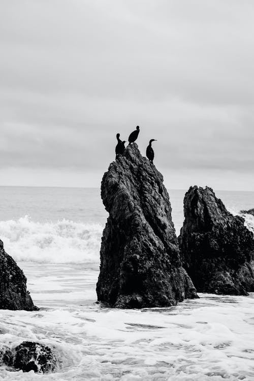 Grayscale Photo of Birds on Rock Formation Near Sea