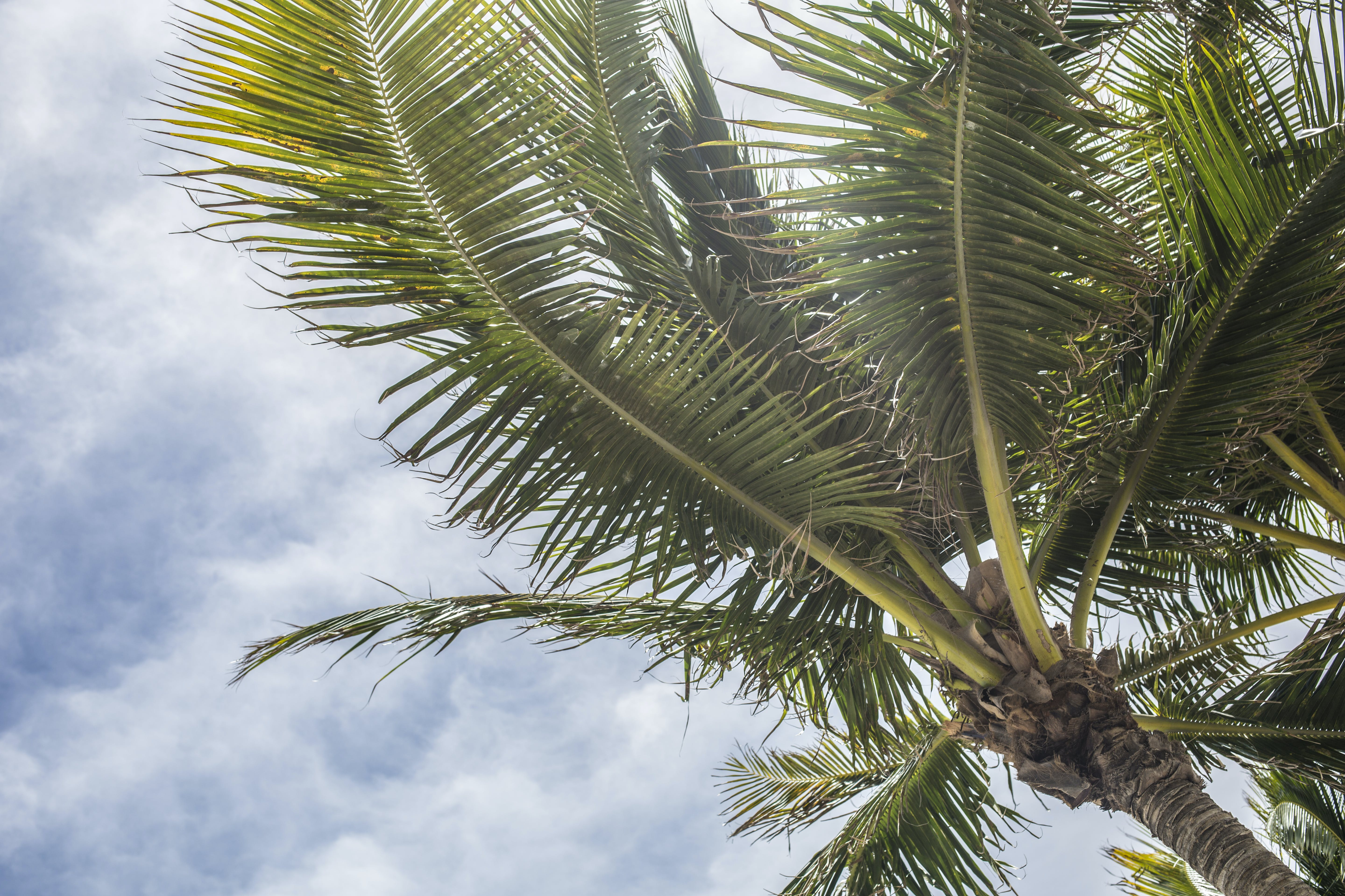 Low Angle Photography Green Coconut Tree