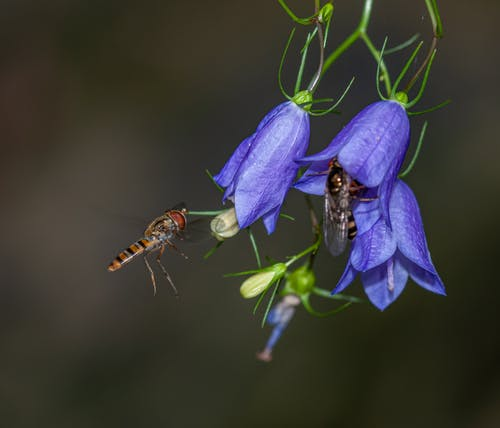 Black and Brown Bees on Purple Flowers