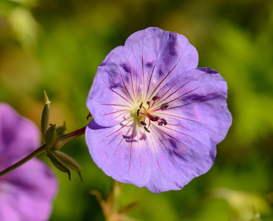 Close-Up Photo Of Purple Flower