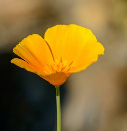 Foto profissional grátis de alegre, amarelo, atraente, aumento